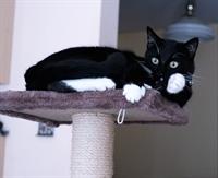 Edwin the cat alert