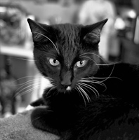 Edwin The Cat Black and White