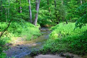 A babbling brook running through the Forest