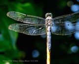 Dragonfly Perched on Branch