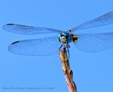 Dragonfly against the blue sky